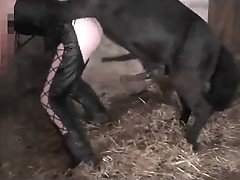 Big black horse fucks chick in leather pants in barn